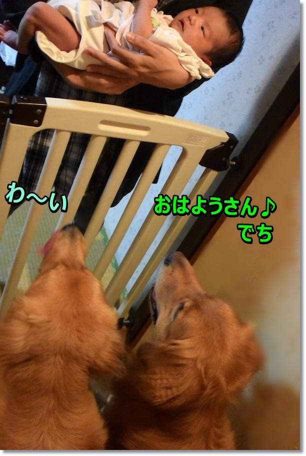 DSC_2123 wa