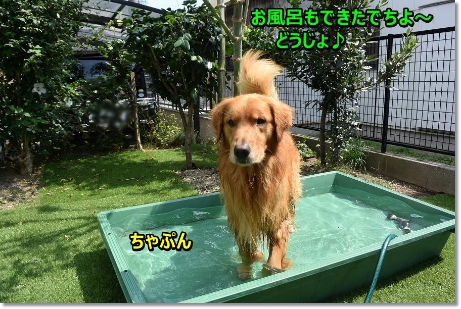 DSC_3143 お風呂も出来たでちよ~