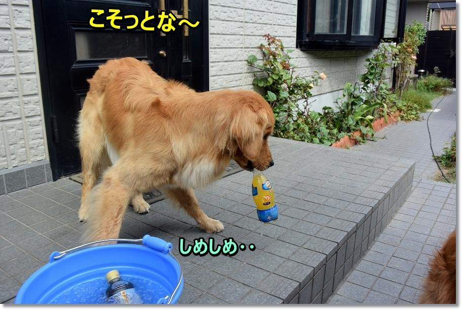 DSC_3219 しめしめ