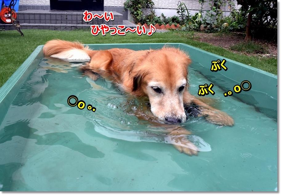 DSC_3290 ぷくぷく
