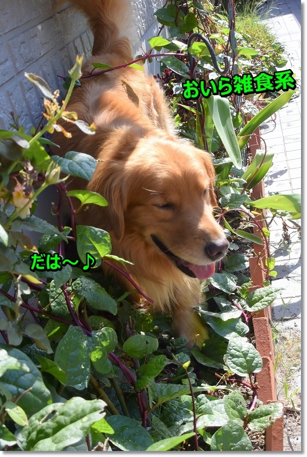 DSC_2481 おいら草食系 雑食系