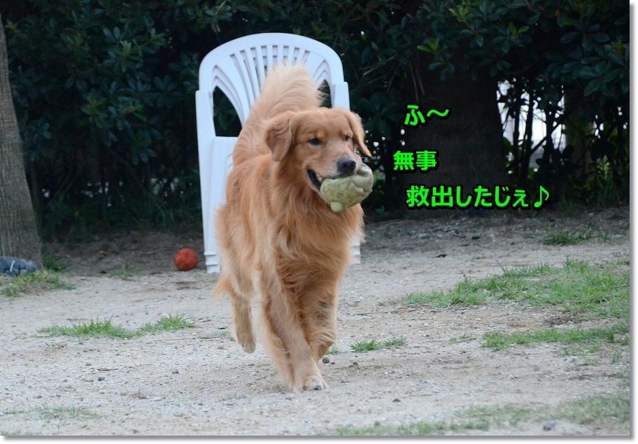 DSC_3180 ふ~