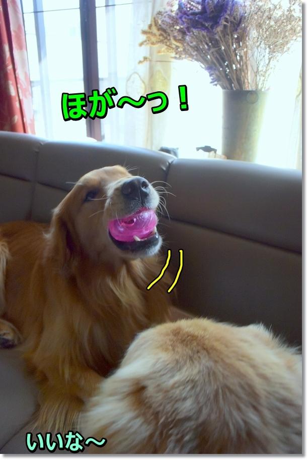 DSC_2936 ほが~