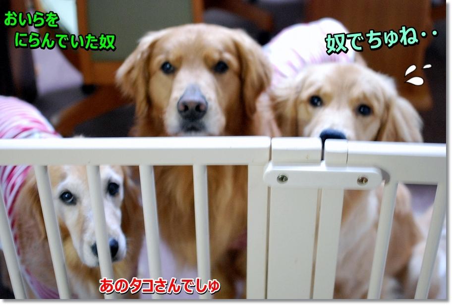 DSC_0006_20160502230623f3b.jpg