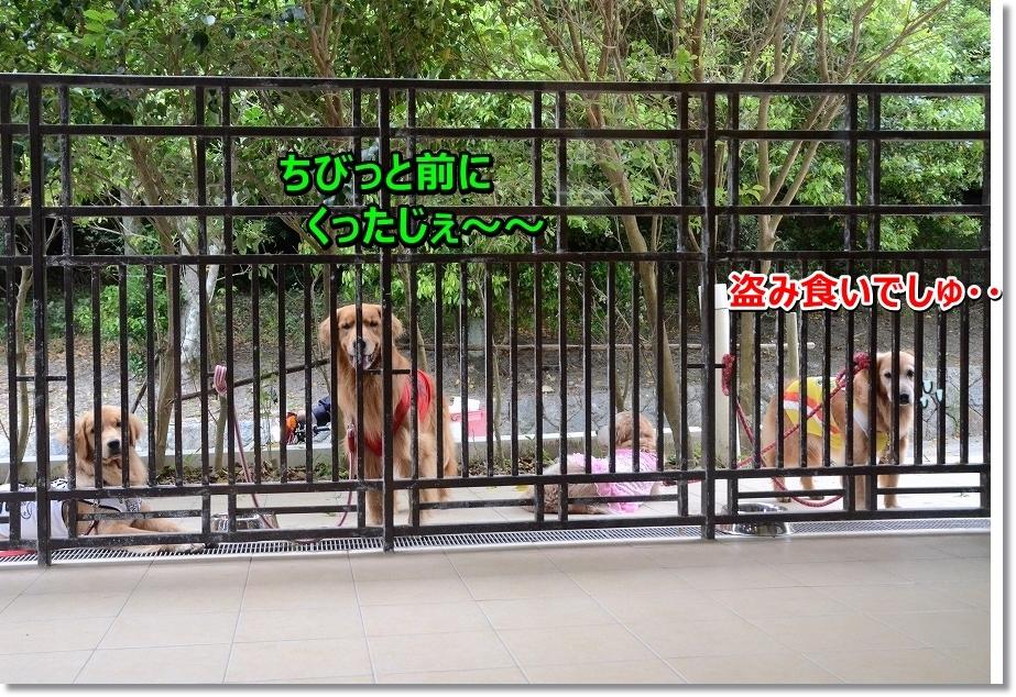 DSC_0011_2016070119544635c.jpg