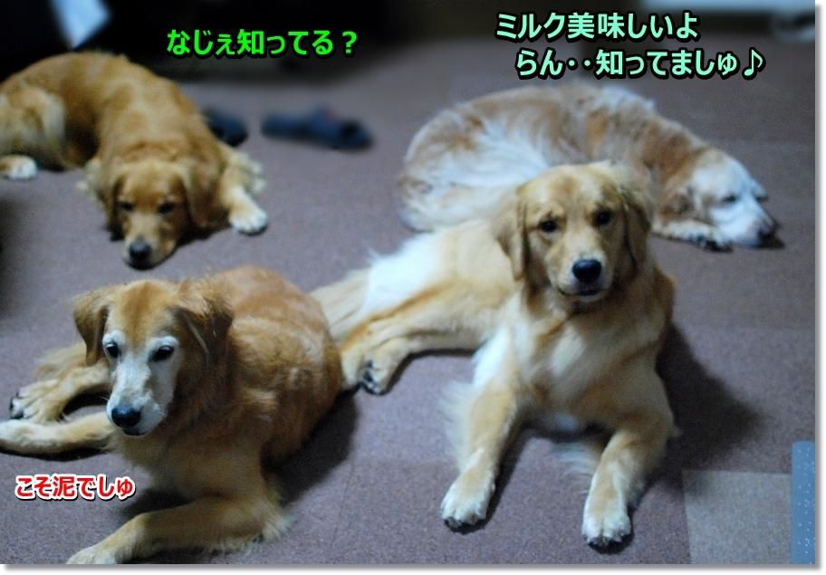 DSC_0053soreoisiiyo.jpg