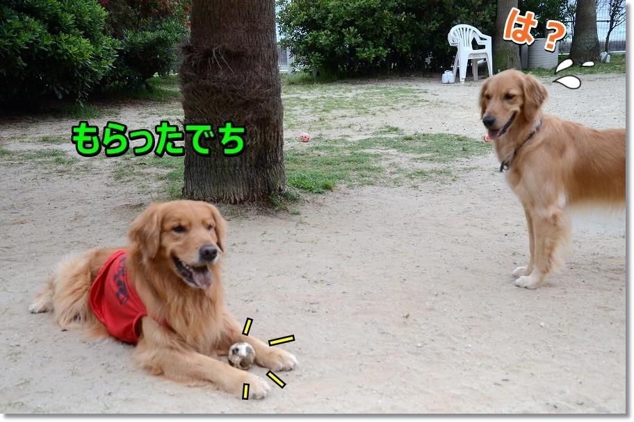 DSC_0056kottimohotii.jpg