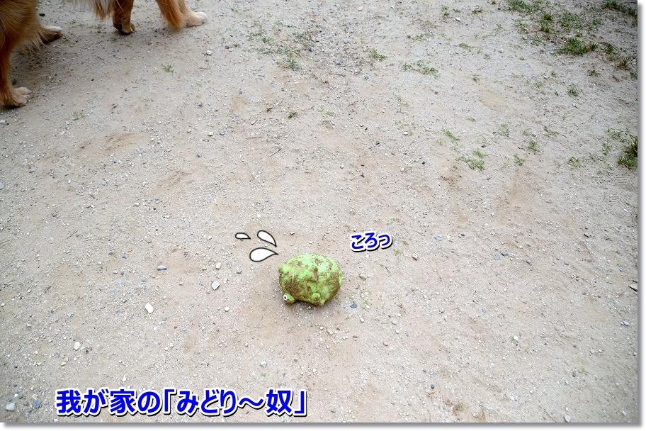 DSC_0061wagayano.jpg