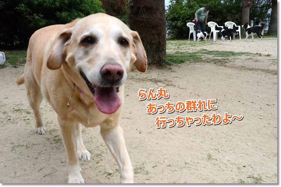DSC_0091_201607021950176c1.jpg