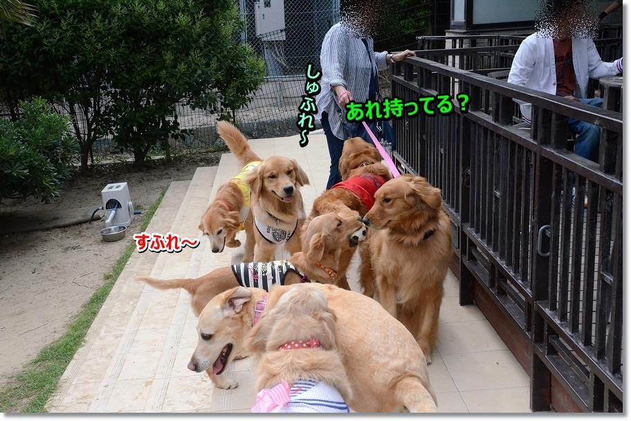 DSC_0101_201607021950449a0.jpg