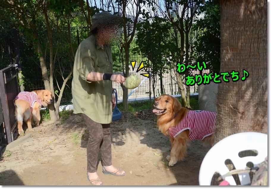 DSC_0233_201607152048104ed.jpg
