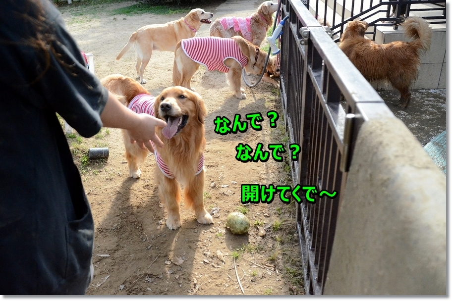 DSC_0258aketekude.jpg