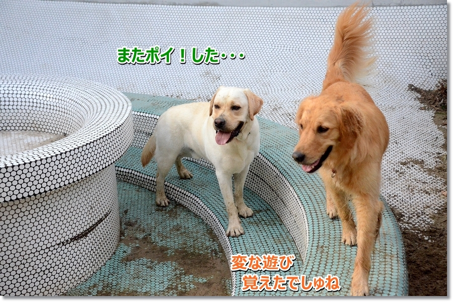 DSC_0261hennaasobi.jpg