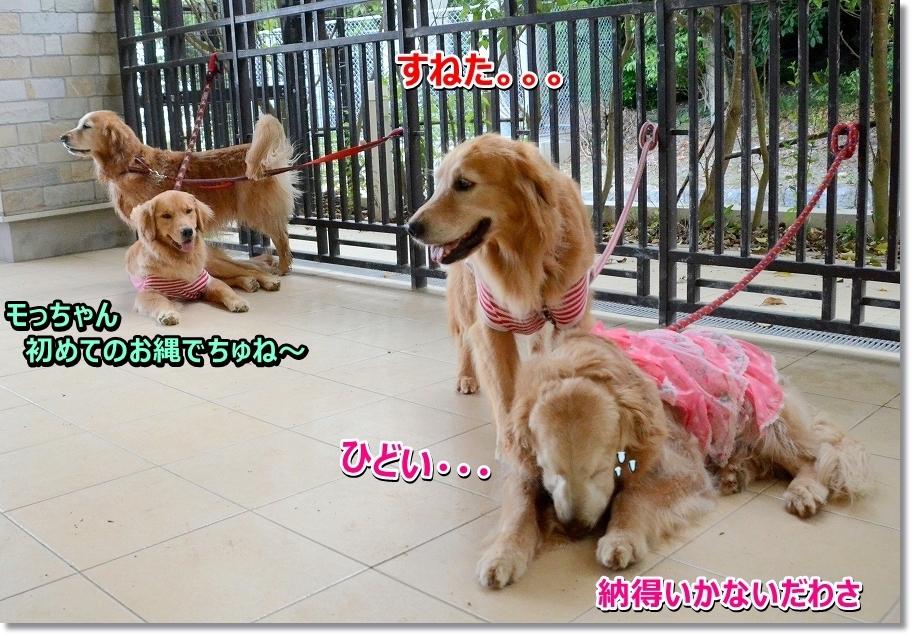 DSC_0299hidoi!nattokuikanai.jpg