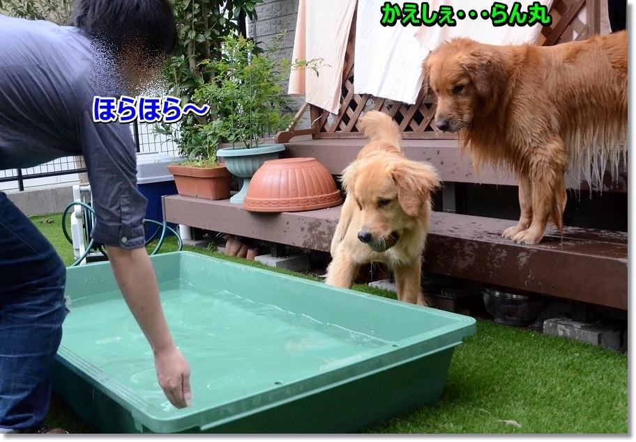DSC_0364kaeshe.jpg