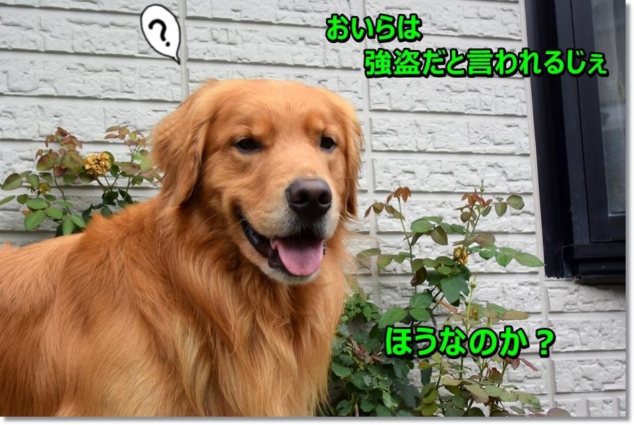 DSC_0378_20160815222606fc3.jpg