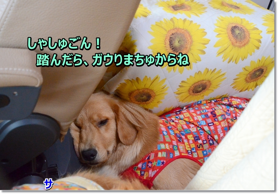 DSC_0606_2016071323240826f.jpg