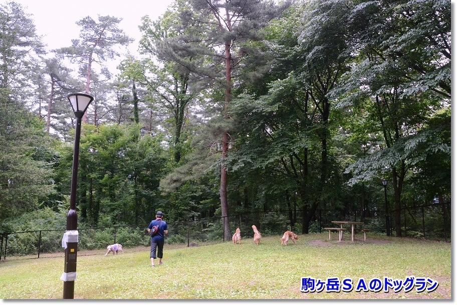 DSC_0610_20160713232430c8e.jpg