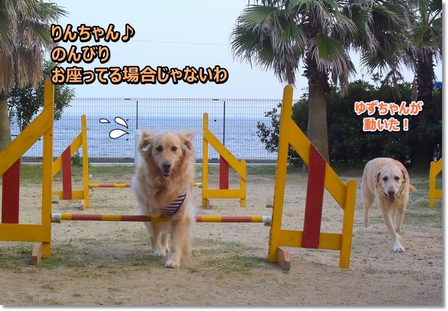 DSC_0765osuwaterubaaijanaiwa.jpg