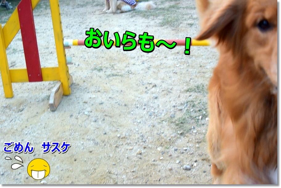 DSC_0818_20160818195108b9d.jpg