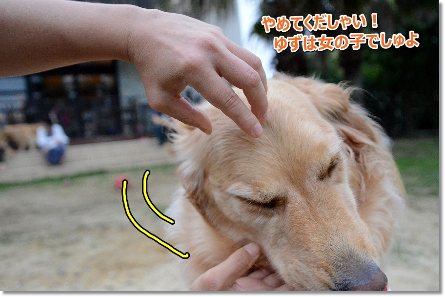 DSC_0833yuzuhaonnanokodesu.jpg