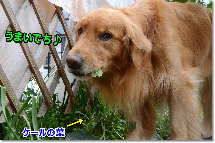 DSC_0890_20160425213906964.jpg