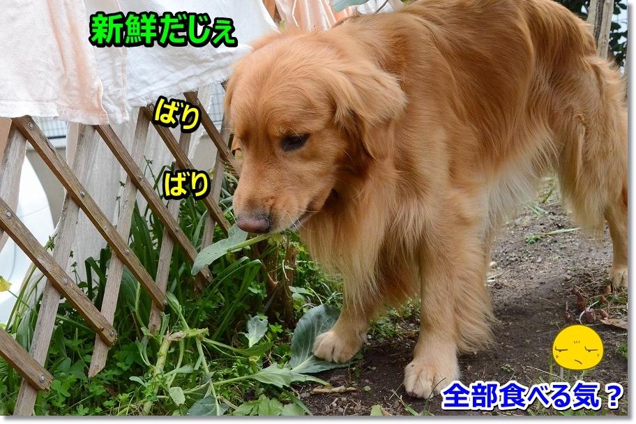 DSC_0897_2016042521392816b.jpg