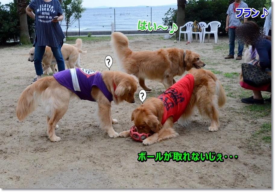DSC_0909mezurasiku.jpg