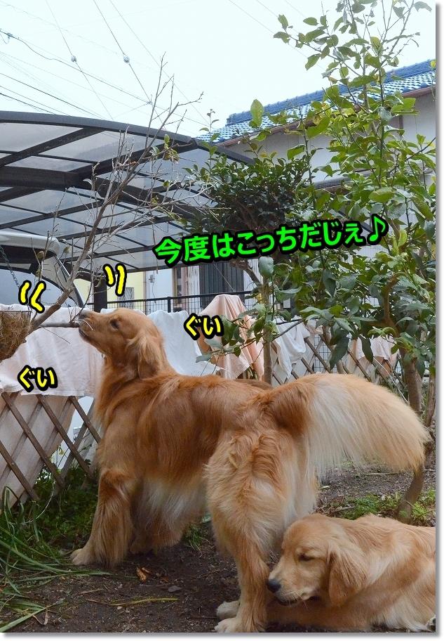 DSC_0911_201604252139313fb.jpg