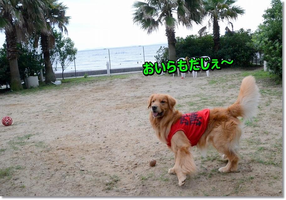DSC_0920_2016071022574812f.jpg