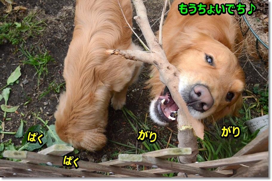 DSC_0927moutyoi.jpg