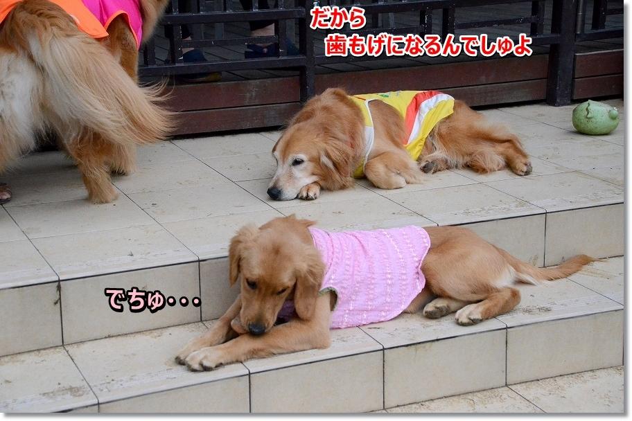 DSC_0930dakarahagaoreru.jpg
