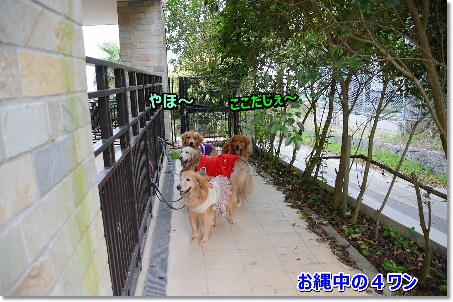 DSC_1055onawanozu.jpg