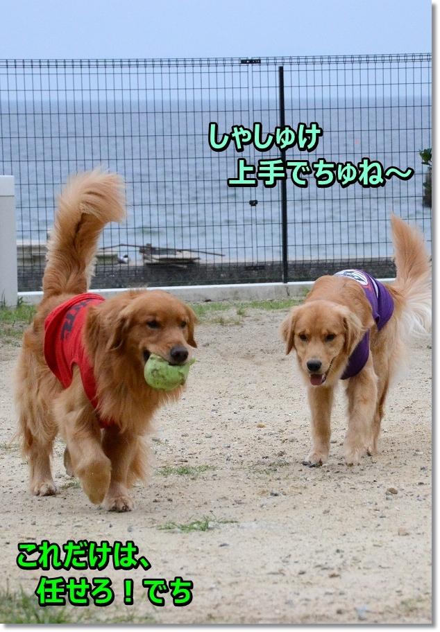 DSC_1102_201607300947579ec.jpg