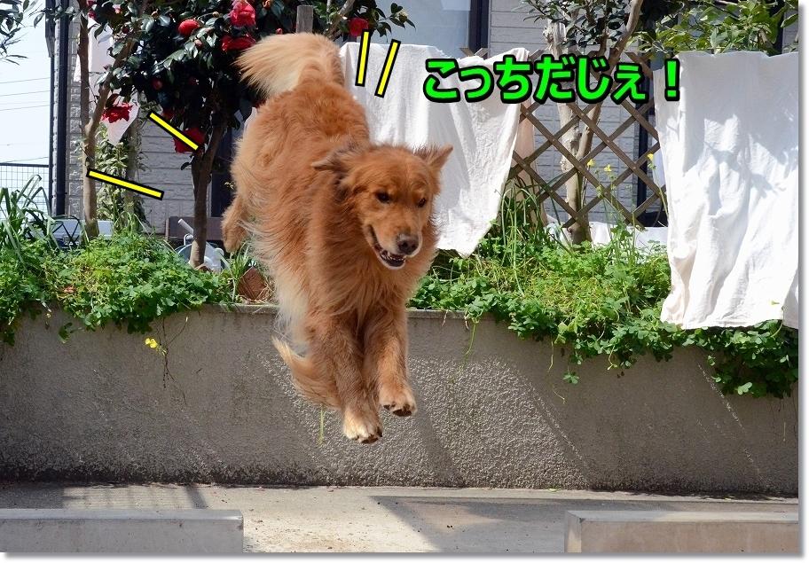 DSC_1342_20160414191913a1e.jpg