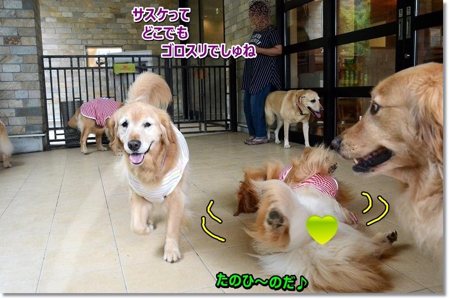 DSC_1342_20160802110214957.jpg