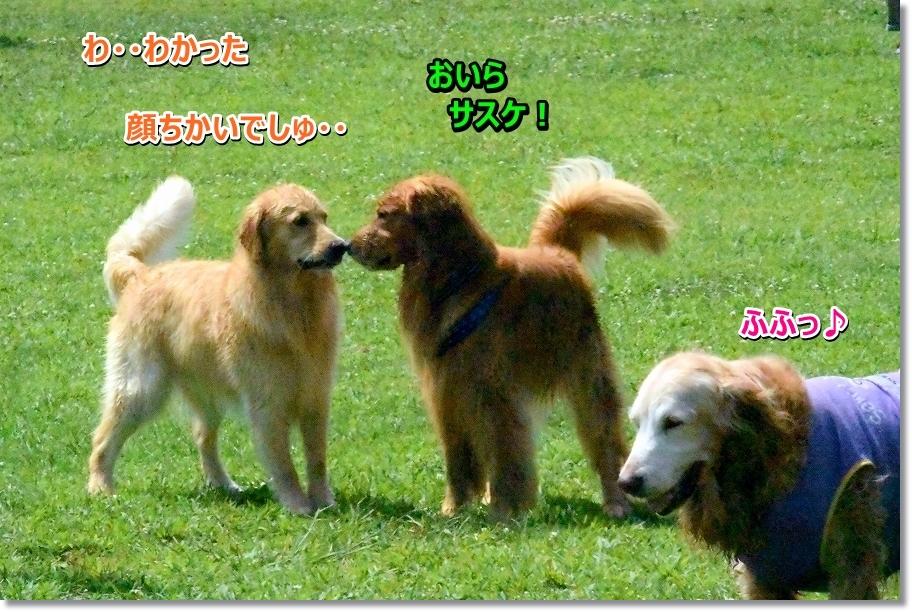 DSC_1344_20160812231958369.jpg