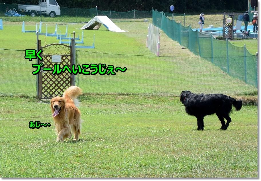 DSC_1514hayakupu-ru.jpg