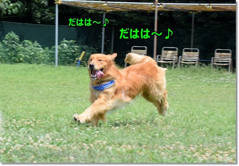 DSC_1524uresi.jpg