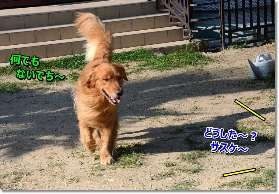 DSC_1533_20160727233200502.jpg