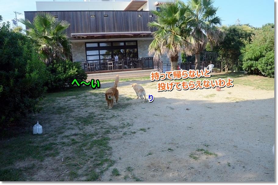 DSC_1540_201607281759402eb.jpg