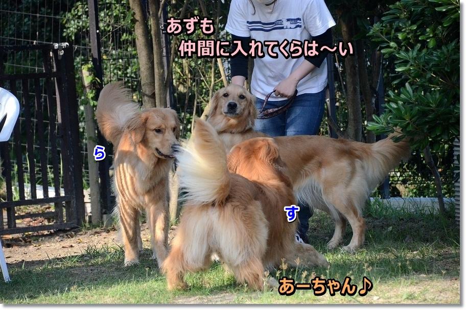 DSC_1558azumooegaine.jpg