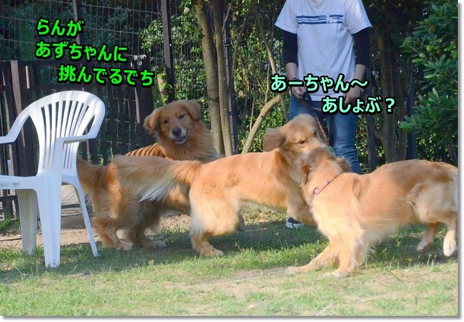DSC_1561ashobo.jpg
