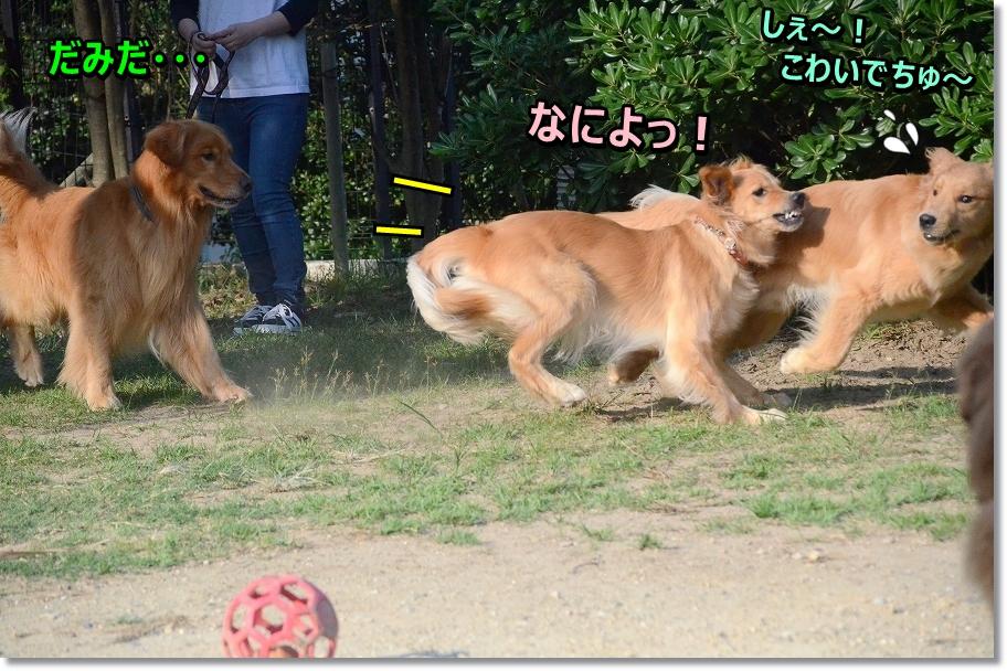 DSC_1562hie!.jpg