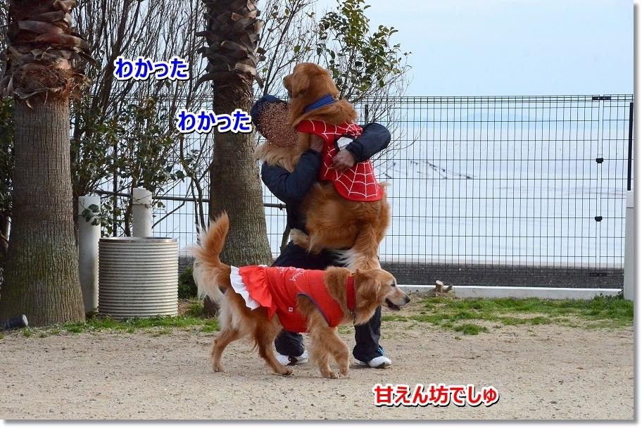 DSC_1570_20160417170628f2f.jpg