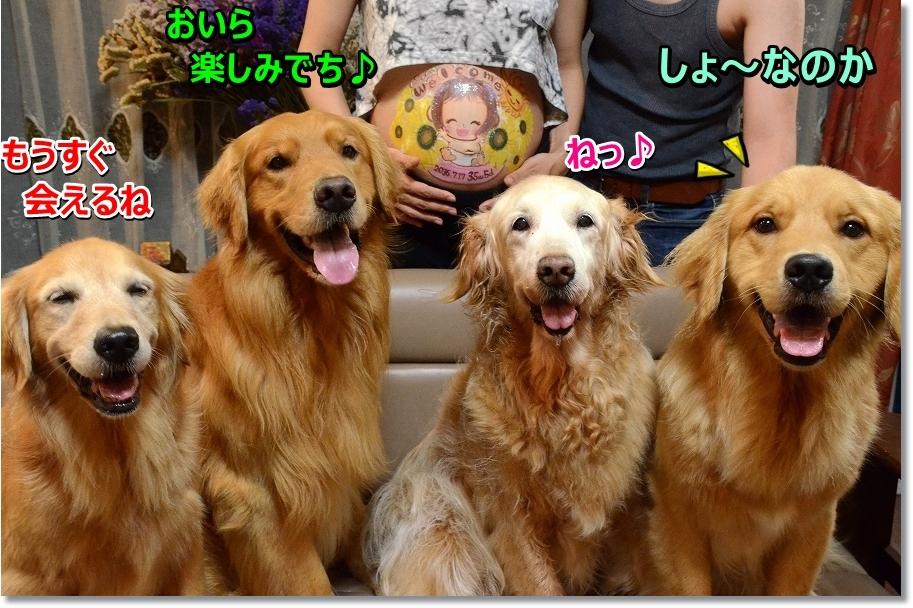 DSC_1720_2016080820510574b.jpg
