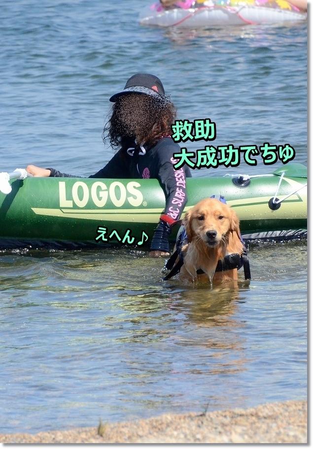 DSC_1877kyujoseikou.jpg