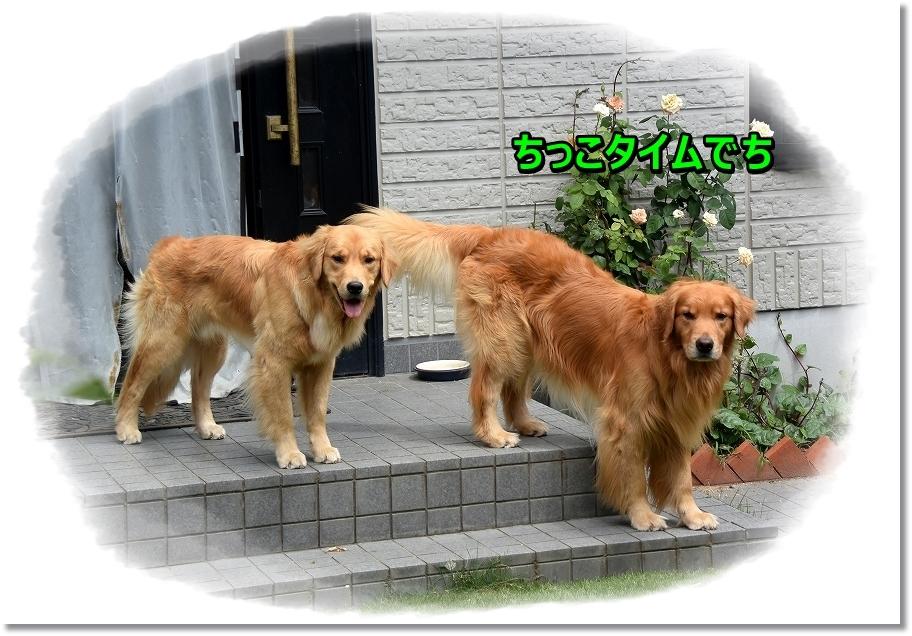 DSC_1975_201609022344035a1.jpg