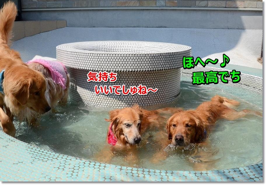 DSC_2246ohuro.jpg