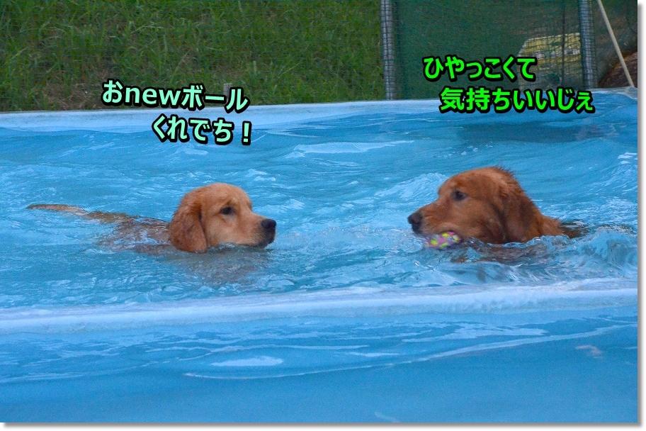 DSC_2431_20160830215547b36.jpg